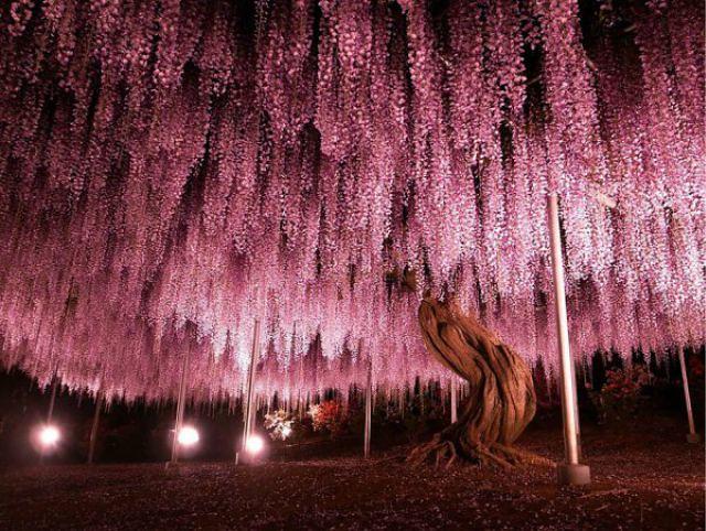 1_amazing-trees-3.jpg