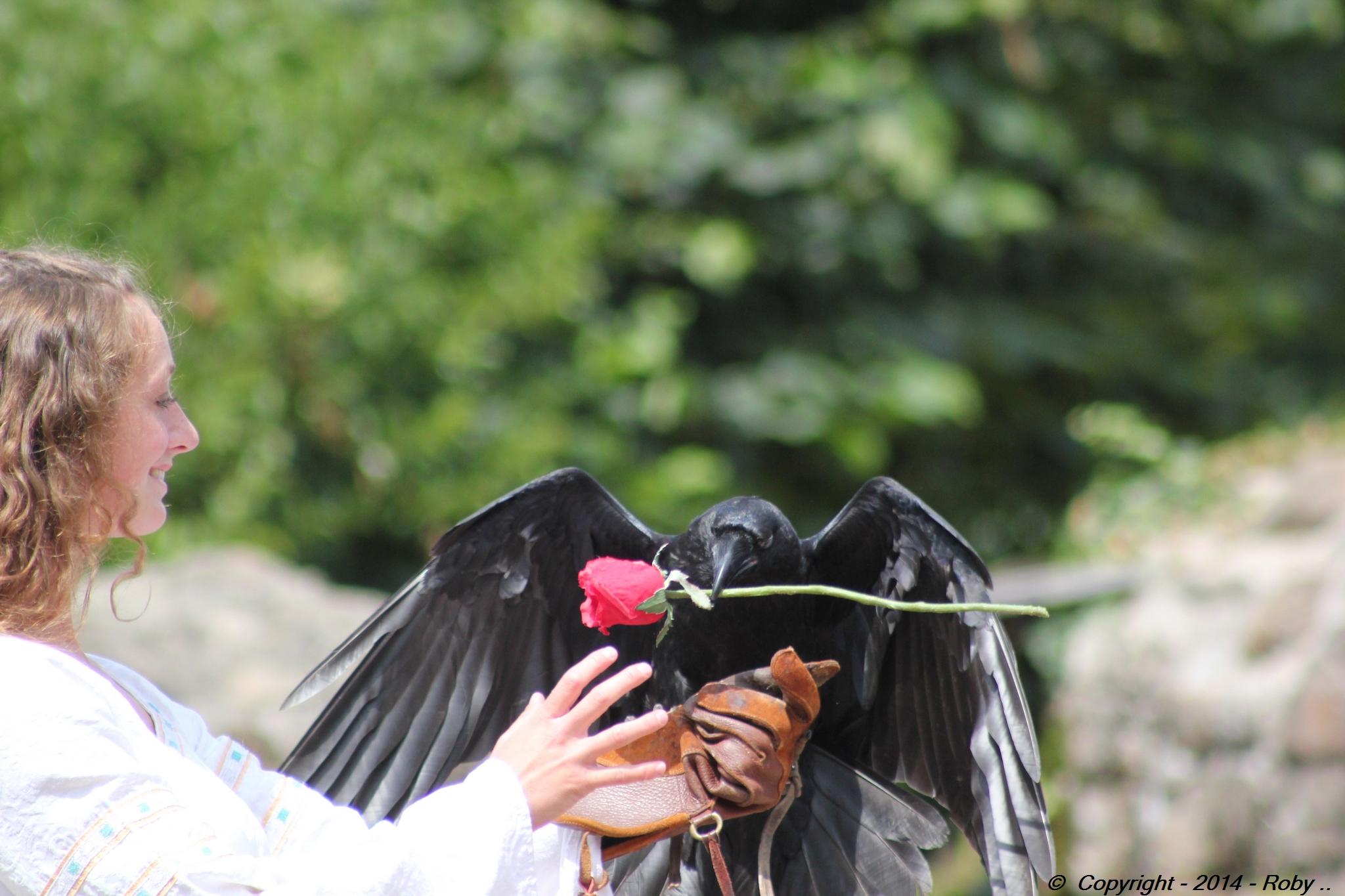 la belle et le corbeau (311)