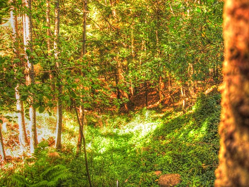 canada raw novascotia hdr intothewoods
