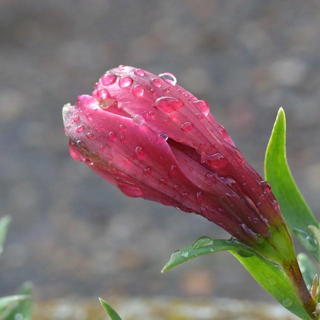 Une jolie Fleur pour Mamie #2