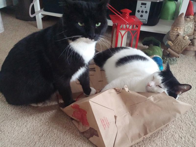 Cat Life / Bag Life