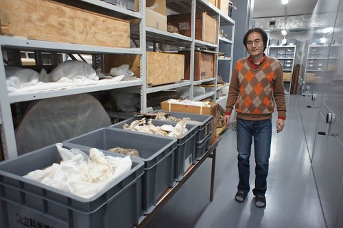 甲能直樹和塵封多年從台灣漂洋過海到日本的化石。作者攝於日本國立自然科學博物館(蒐藏庫於茨城縣)