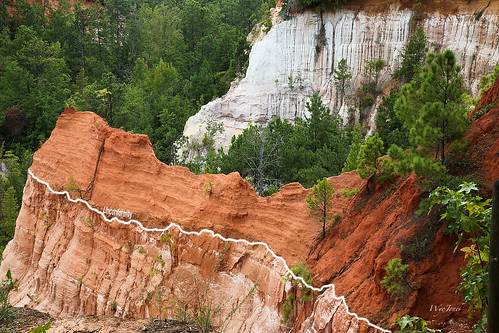 pink trees red orange usa white georgia sand flute canyon redclay erosion ridge clay strata np silt gully lumpkin georgiaclay unconformity paleosol providencecanyonstatepark streamerosion wyojones providencecanyonstateoutdoorrecreationarea erosionalsurface