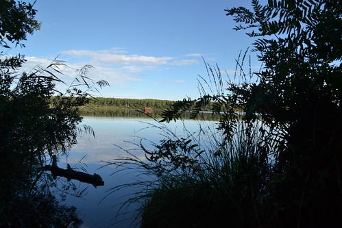 043 - l'étang blanc