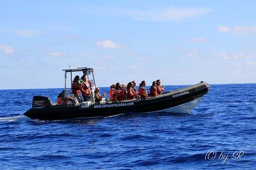 Azores2014_0389
