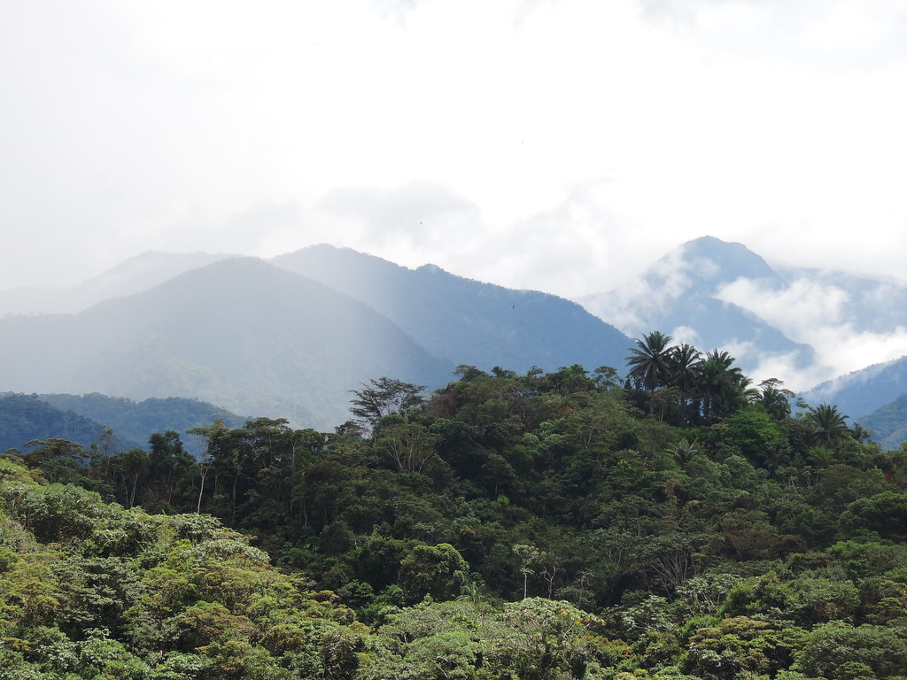 Piedemonte amazónico, cordillera occidental