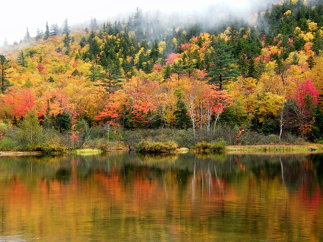 Autumn Mist Decending