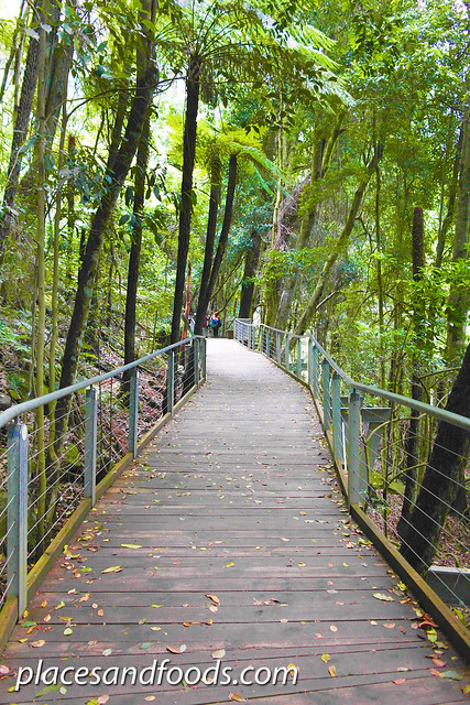 scenic world walkway board walk
