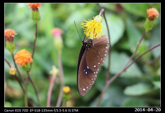 20140420_Butterfly