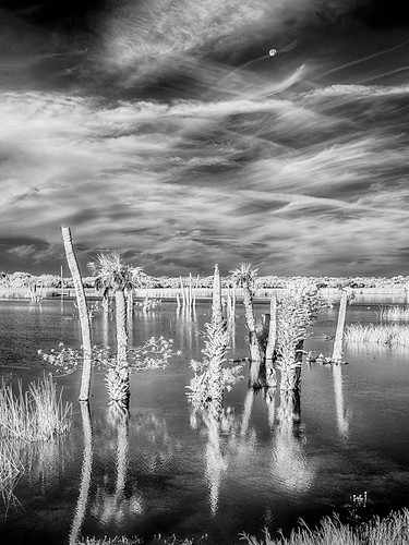 sky blackandwhite bw panorama usa cloud moon reflection tree water grass landscape ir florida palm swamp infrared marsh centralflorida viera vierawetlands edrosack