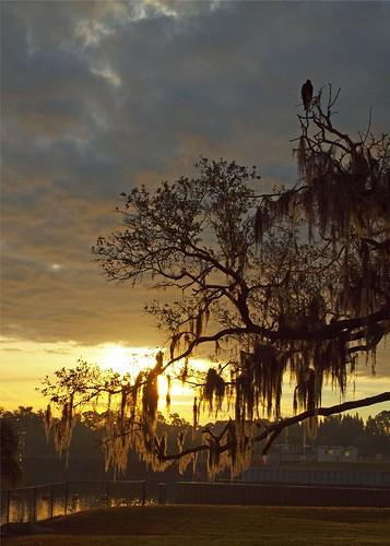 sky tree dawn oak florida stuart angry perch vulture lockdam saintlucie