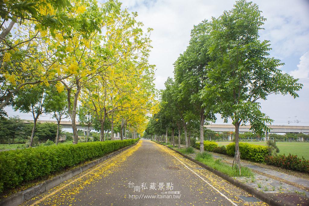 台南私藏景點--高鐵阿勃勒 (7)