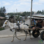 Horse Cart and Friendly Kids - Northern Ethiopia