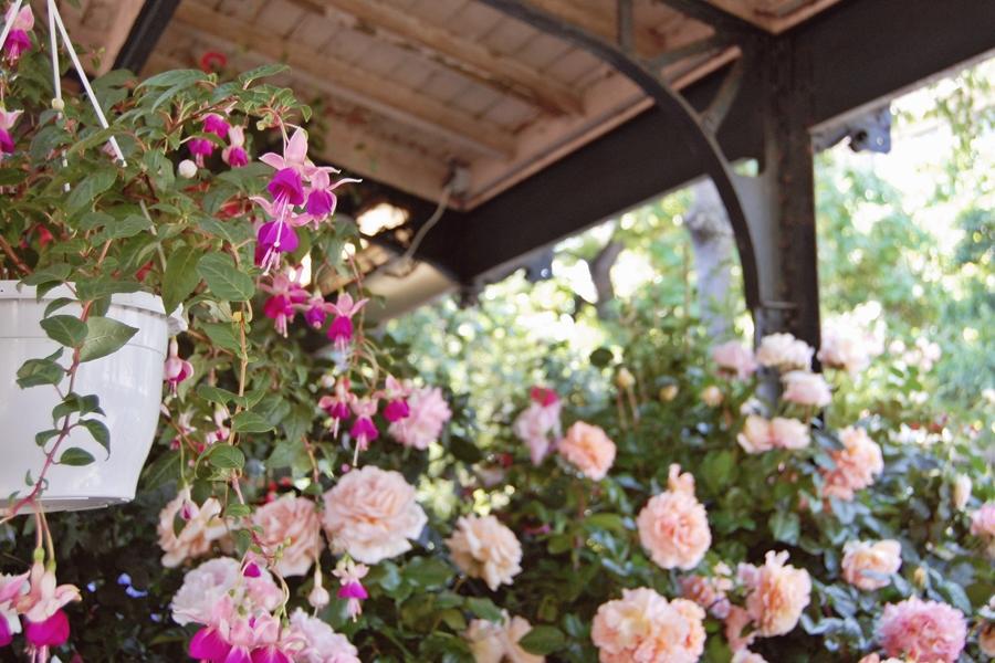 Marché aux fleurs (14)