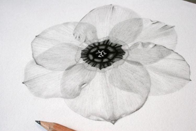 цветок гафика