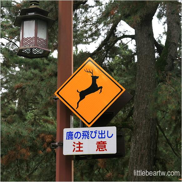 奈良公園-05
