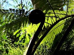 Forêt de Bélouve - Ile de la Réunion