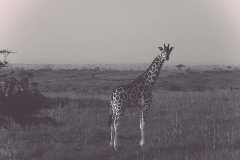 africansafari2014-8