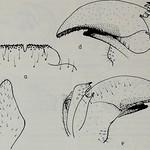 Image From Page 57 OfquotTijdschrift Voor Entomologie quot 1857