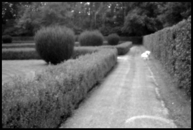 THE PARK . Pinhole photography
