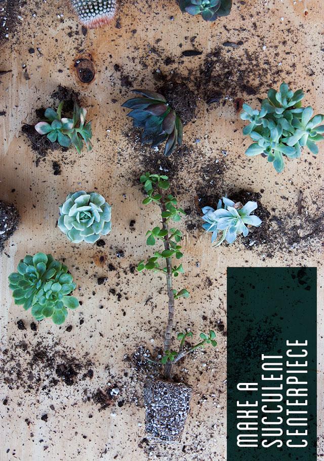 succulent-centerpiece-1