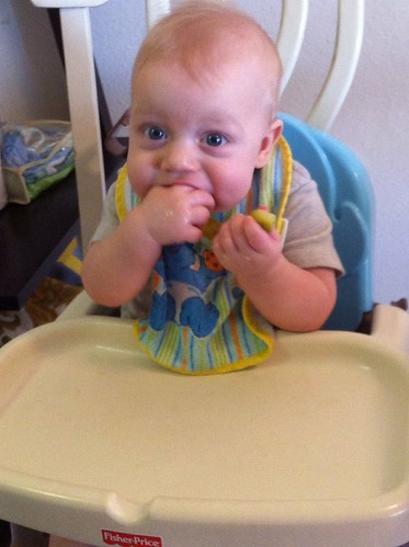 A Tale of Two Pickles: Pickle 2-gnaw gnaw gnaw (better than a teething biscuit!)