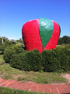A big apple in Medina