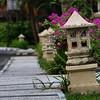 Bunga di tepi trotoar #flowersturk #flowerstagram #streetphotography