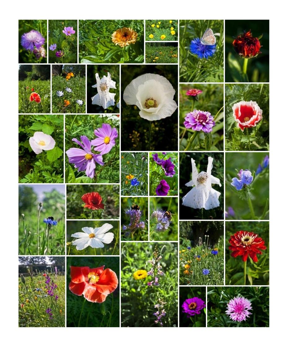 Flowers at Dickinson House—photos by Joe Coghlan