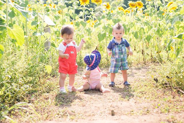 2014-08-08 Sunflower maze-003.jpg