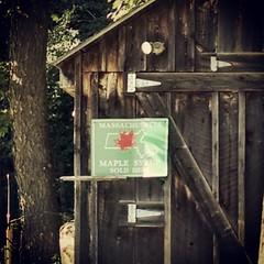 Sugar shack.  #maplesugar #shack #wmass #igersmass #cummington