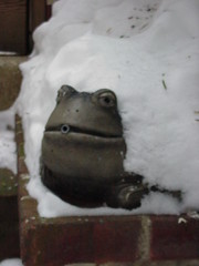 Frog in Snow 013000