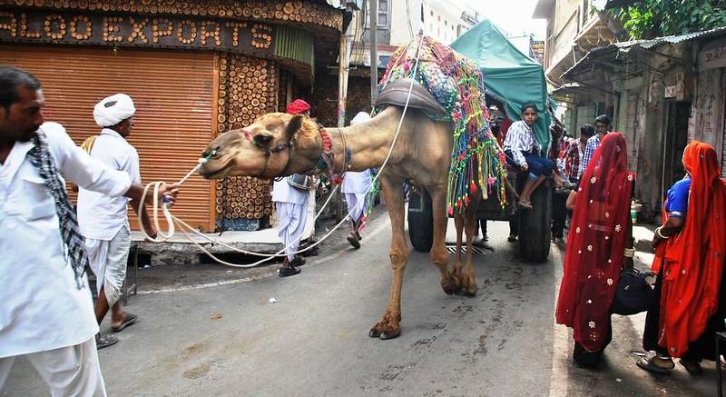 329 Macro Boda en Pushkar (11)