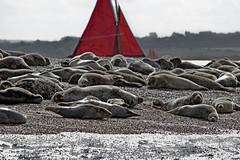 Blakeney Point August 2014