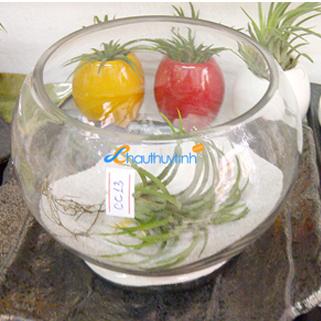caykhongkhi24h.com | cay khong khi | terrarium | chau thuy tinh | chau thuy tinh cao cap
