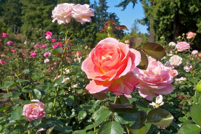 Portland japanese gardens photowalk vancouver blog miss604 - Portland japanese garden free day ...