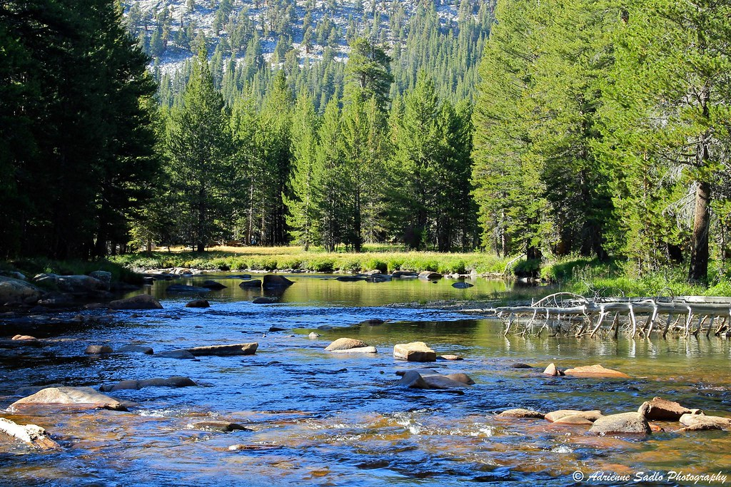Tuolumne River - Yosemite National Park