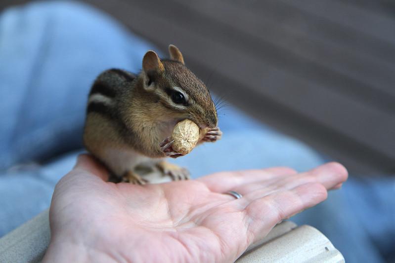 Indy scores a peanut