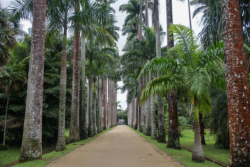 Jardim Botanico Brasilia Brazil Rio de Janeiro Botanical garden