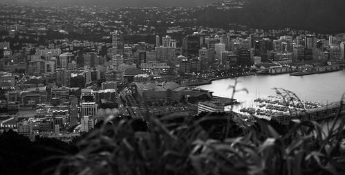 <p>Overlooking Wellington, New Zealand</p>