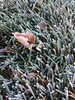 Frost on grass with leaf