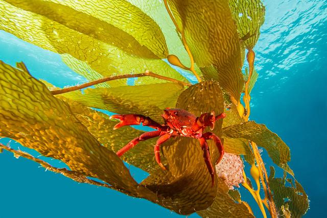 crab4Feb2-14