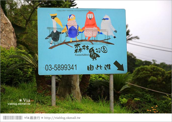 【新竹景點推薦】森林鳥花園~親子旅遊的好去處!在森林裡鳥兒與孩子們的樂園2