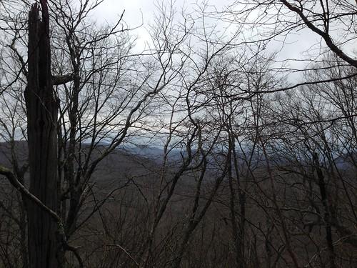 trees mountains view
