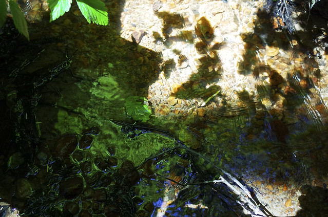 reflections in estuary creek