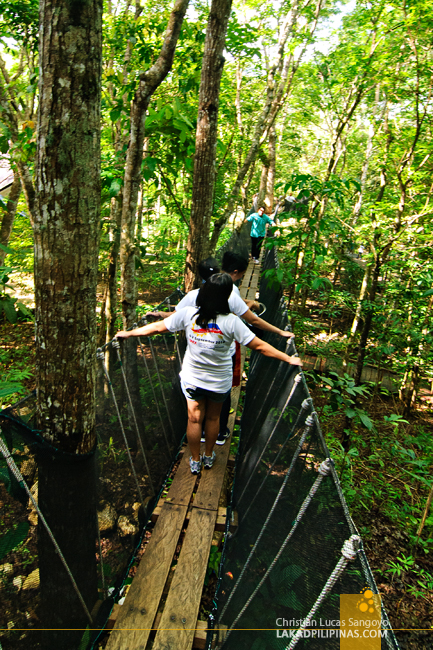 Hanging Bridge at the Chocolate Hills Adventure Park (CHAP)