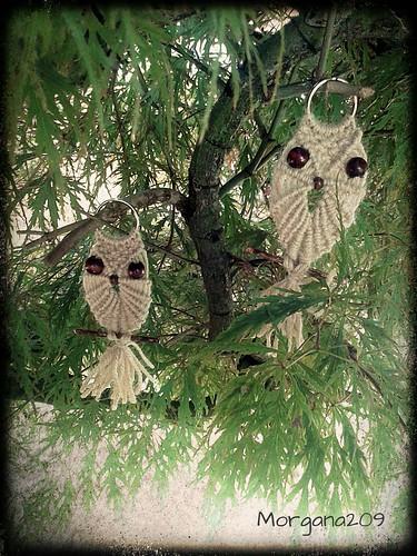 Macrame owl!