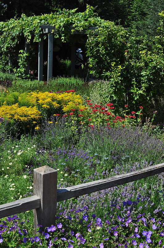 Herb Garden Border (1)