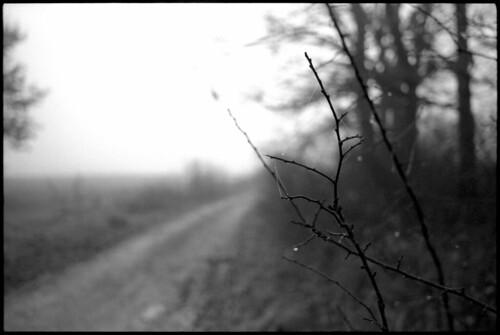 road morning trees sun tree film nature fog landscape blackwhite pentax takumar kodak path foggy croatia spotmatic t400cn 135mm asahipentax 125asa c41 chromogenic supermulticoatedtakumar colornegative pullprocess camera:brand=pentax camera:type=slr film:brand=kodak supermulticoatedtakumar135135 film:format=135 kodakprofessionalt400cn lens:focallength=135mm location:country=croatia spotmaticspf film:process=c41 film:speed=400 lens:brand=asahipentax desinec honeywellpentaxspotmaticspf lens:brand=takumar camera:mount=m42 lens:maxaperture=35 camera:model=spotmaticspf film:model=t400cn lens:brand=pentax camera:year=1971 film:expiry=expired camera:brand=honeywellpentax camera:format=135 lens:format=135 film:ei=125 lens:brand=supermulticoatedtakumar lens:model=135135