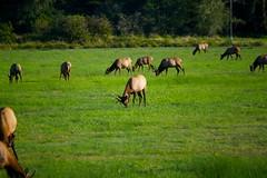 North American Wildlife 63